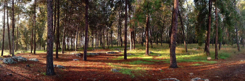 "фото ""Ben Shemen Forest Panoramic View"" метки: пейзаж, природа, цветы"