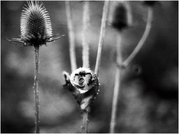 """фото """"@"""" метки: природа, черно-белые, цветы"""