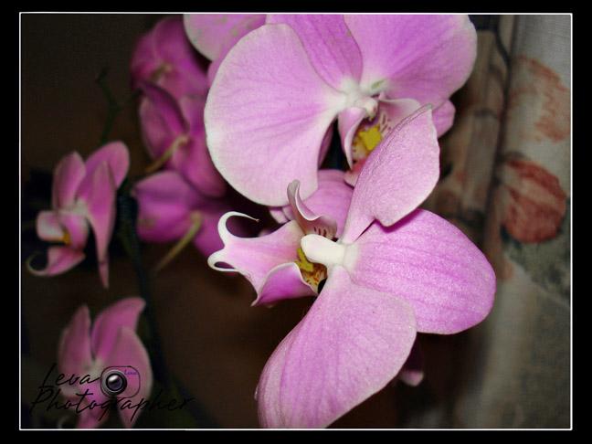 """фото """"орхидея"""" метки: природа, цветы"""