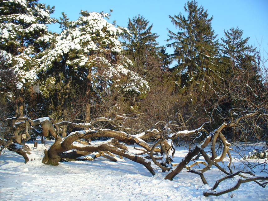 """photo """"The crooked tree"""" tags: landscape, winter"""
