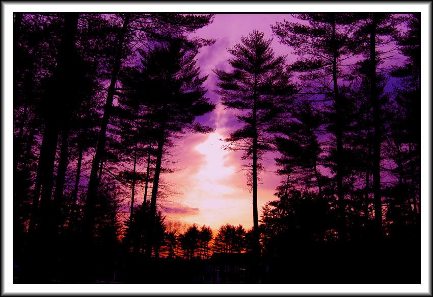 "фото ""Forest Sun"" метки: пейзаж, закат, лес"