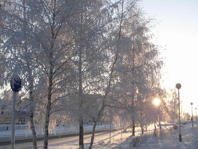 """photo """"""""Frosty morning"""""""" tags: landscape,"""