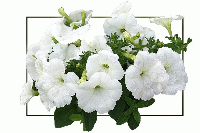 """фото """"Подарок невесте"""" метки: природа, макро и крупный план, цветы"""