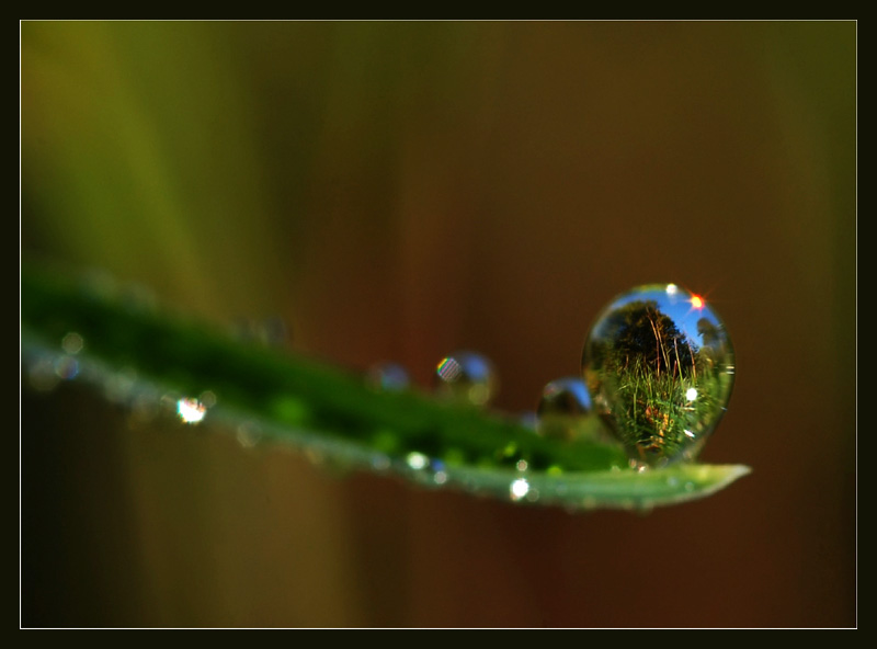"photo ""impossible pearl"" tags: macro and close-up,"