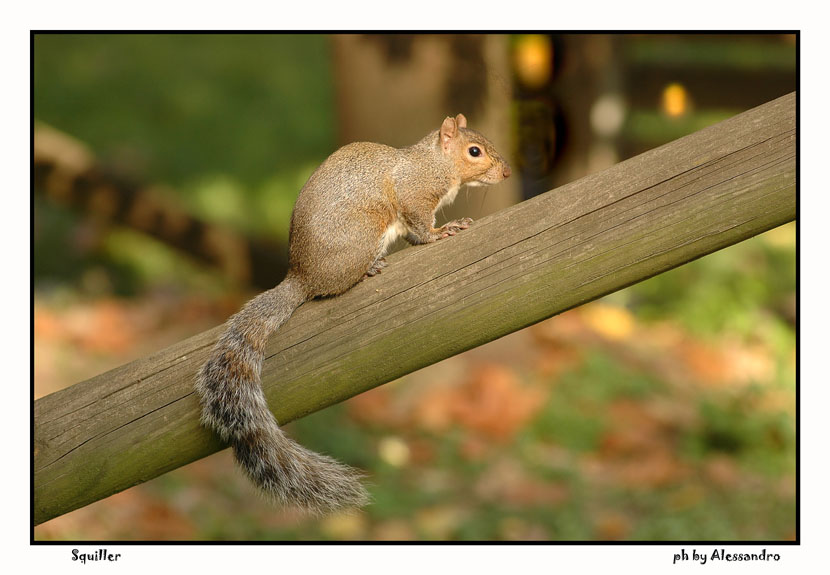 "photo ""squiller"" tags: nature, pets/farm animals"