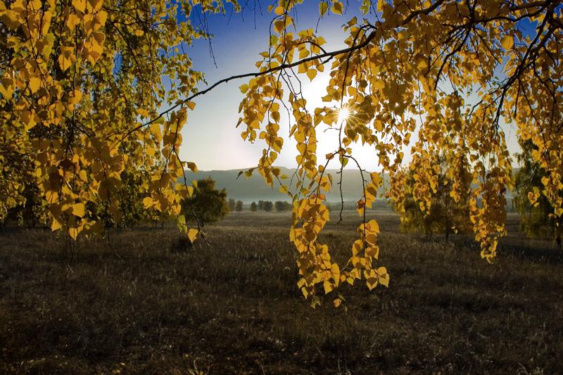 """фото """"Жёлтые листья"""" метки: пейзаж, лес, осень"""