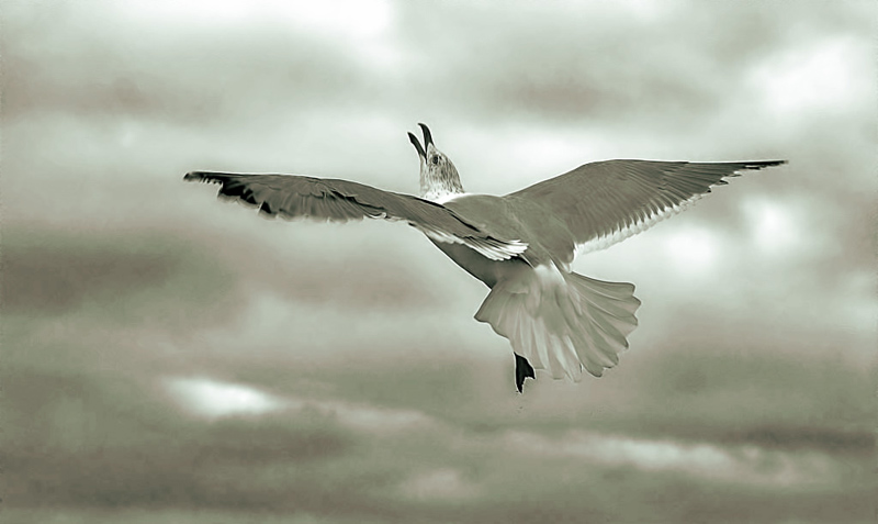 "photo ""Shout of Freedom"" tags: nature, wild animals"