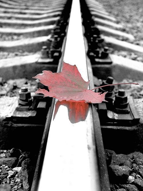 "фото ""Вспоминая осень"" метки: пейзаж, осень"