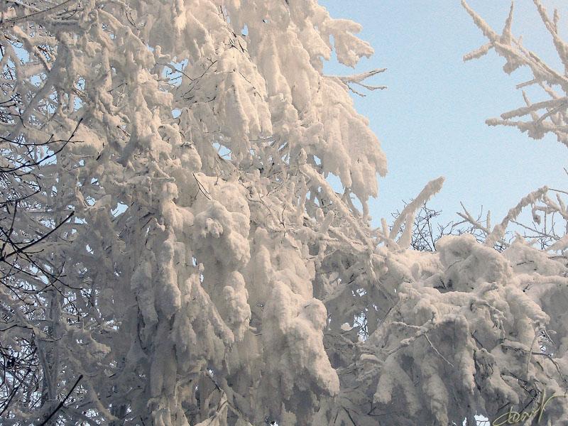 """фото """"Волшебница зима"""" метки: природа, цветы"""