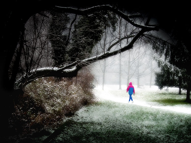 "photo ""Spiderman in the winter?"" tags: landscape, forest"