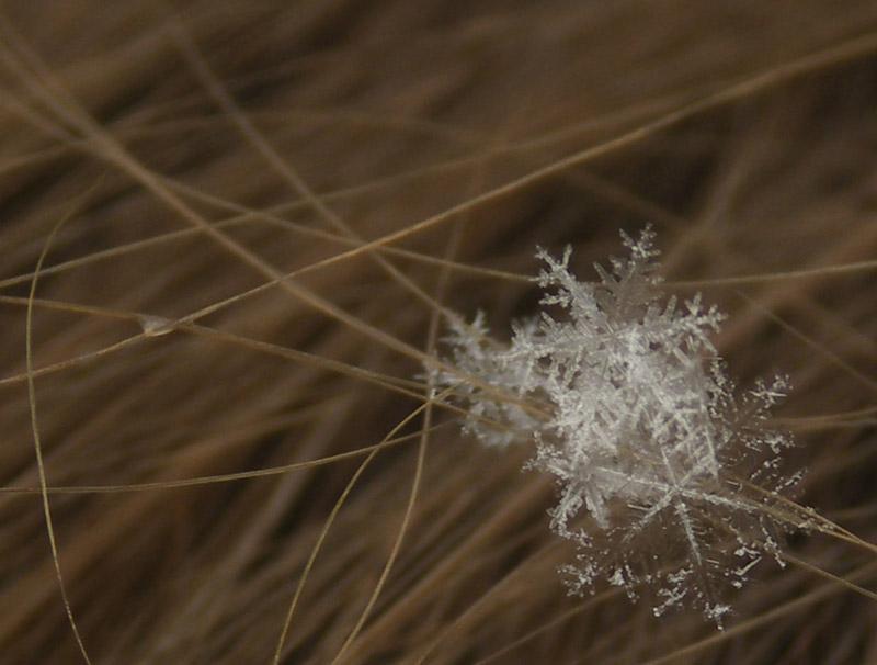 "photo ""Winter Hair-pins"" tags: misc., macro and close-up,"