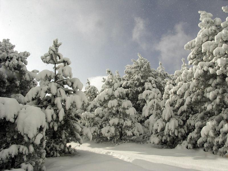 "фото ""Silent Flakes"" метки: пейзаж, зима, лес"