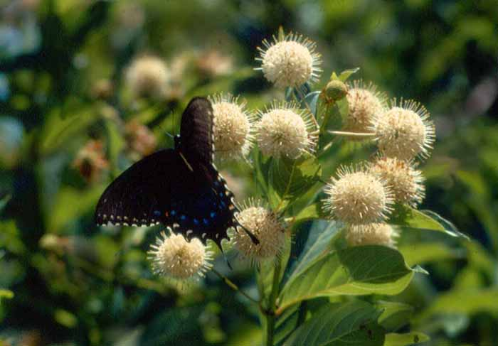"photo ""Butterfly in summer"" tags: nature, flowers, insect"