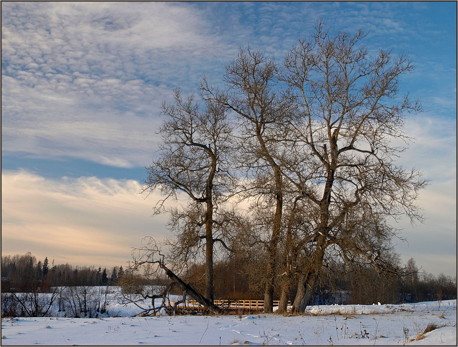 "photo ""Simple view with old trees."" tags: landscape, winter"