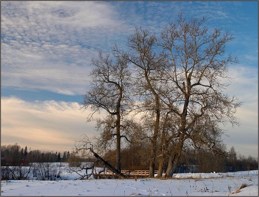 """фото """"Простой пейзаж со старыми деревьями"""" метки: пейзаж, зима"""