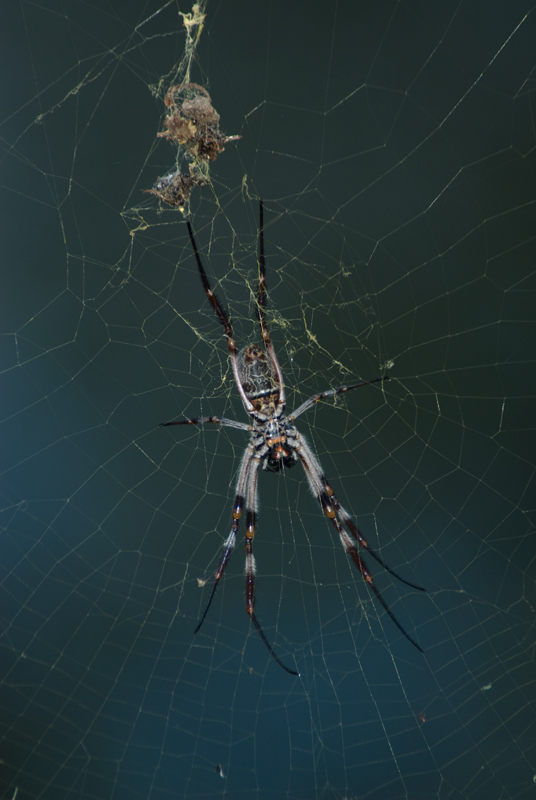 "photo ""Spider's world"" tags: nature, insect"