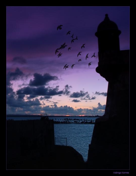 "фото ""puerto rico - birds sunrise"" метки: путешествия,"