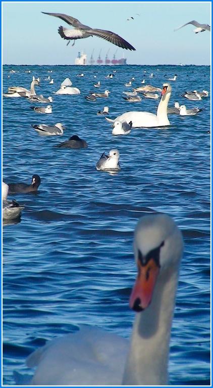 """фото """"Мираж"""" метки: пейзаж, природа, вода, дикие животные"""