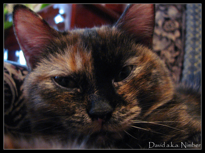 "photo ""kitty"" tags: ,"