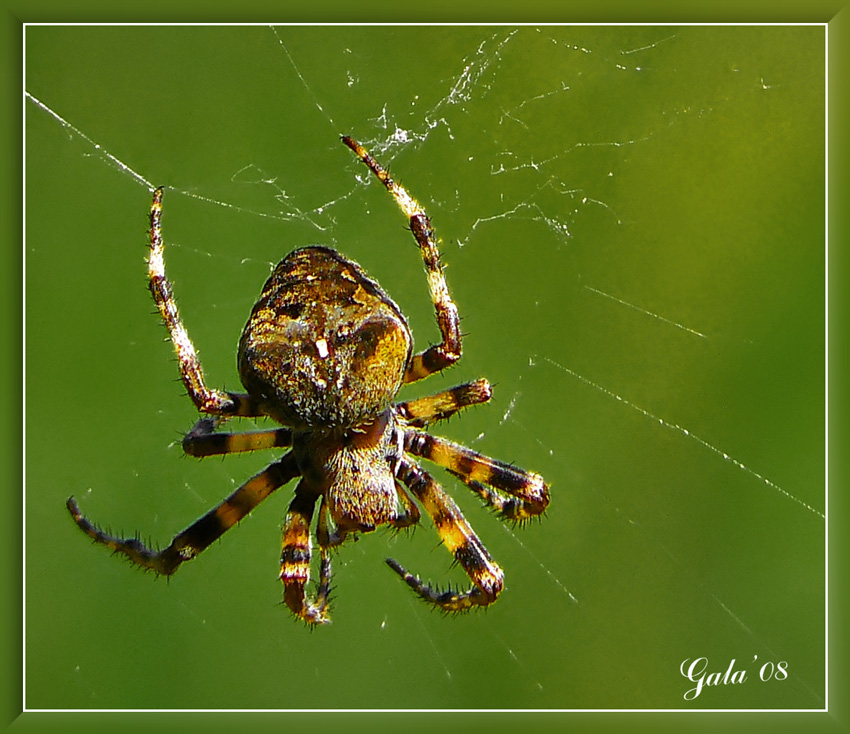 "photo ""The morning gymnastics"" tags: macro and close-up, nature, insect"