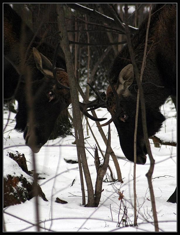"""фото """"Глаза в глаза"""" метки: природа, дикие животные"""