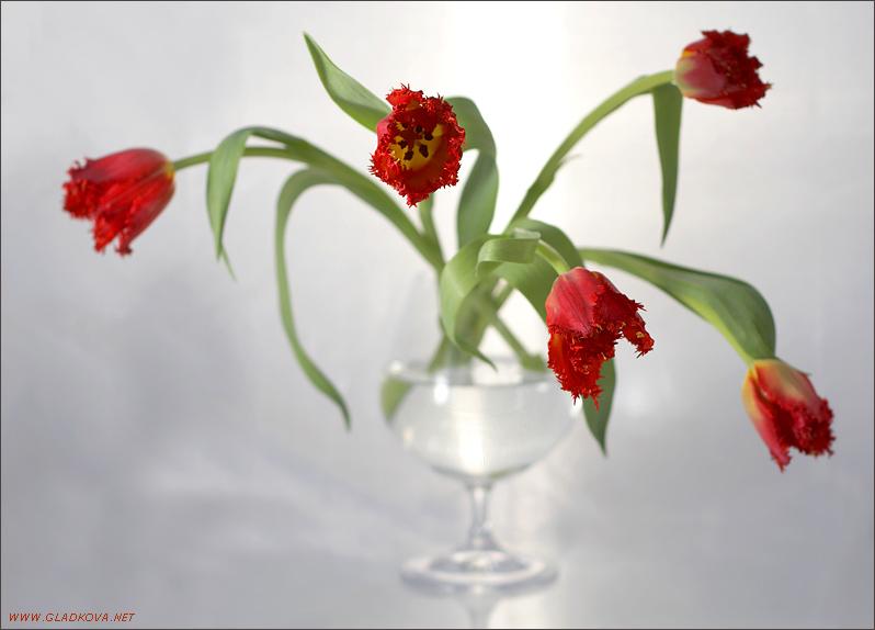 """фото """"Про тюльпаны"""" метки: природа, натюрморт, цветы"""
