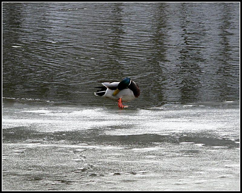"""фото """"что там за  ( запах)...."""" метки: пейзаж, природа, вода, дикие животные"""