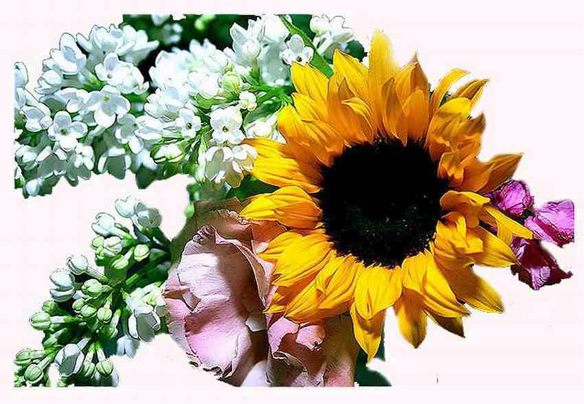 "фото ""the power of flowers"" метки: природа, портрет, цветы"