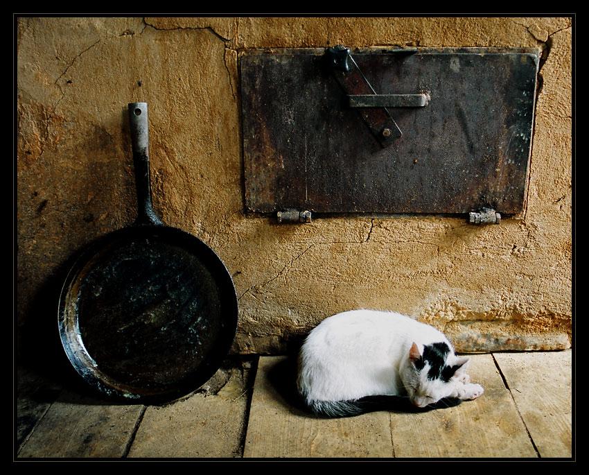 """фото """"After dinner"""" метки: натюрморт, природа, домашние животные"""