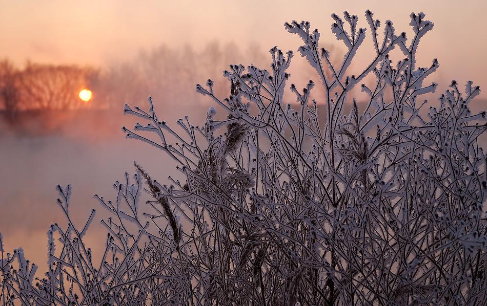 """фото """"Российские кораллы."""" метки: пейзаж, закат, зима"""