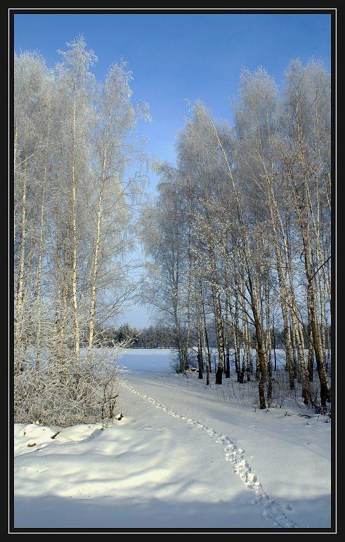 """фото """"* * *"""" метки: пейзаж, зима, лес"""