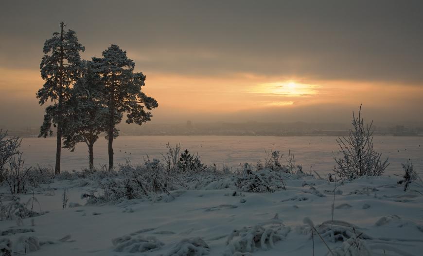 """фото """"Три сосны на зимнем берегу"""" метки: пейзаж, зима"""