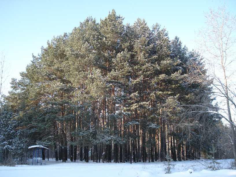 """фото """"""""Зимний пейзаж"""""""" метки: пейзаж, зима, лес"""