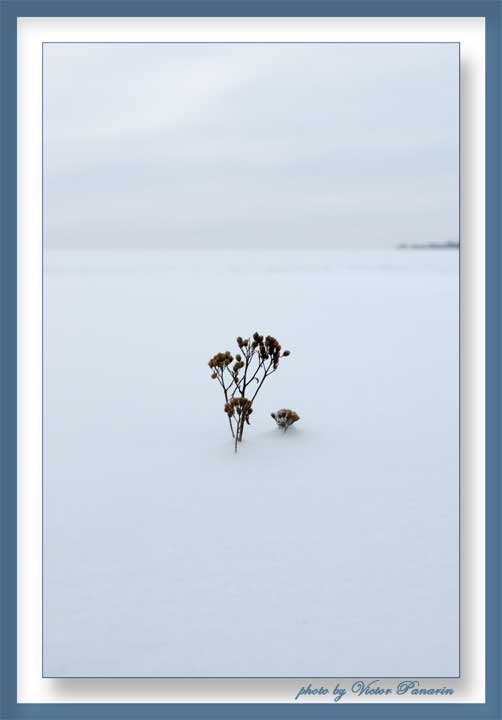 "фото ""Просто наступила Зима"" метки: пейзаж, зима"