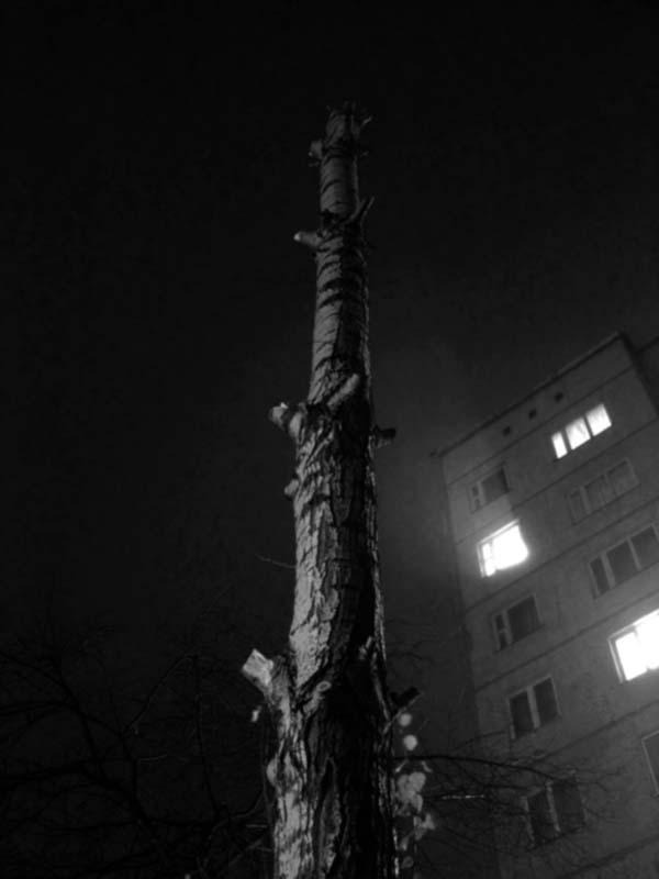 "фото ""Туманный торчун"" метки: абстракция,"