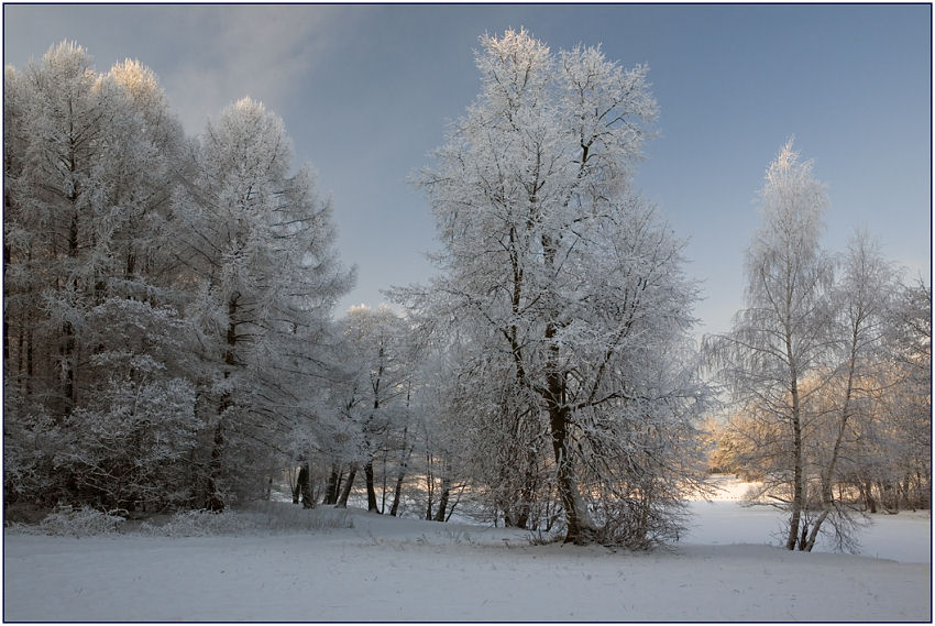 "photo ""Fluffy winter"" tags: landscape, forest, winter"