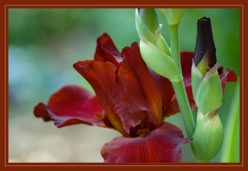 """photo """"Seeing  Red"""" tags: nature, macro and close-up, flowers"""