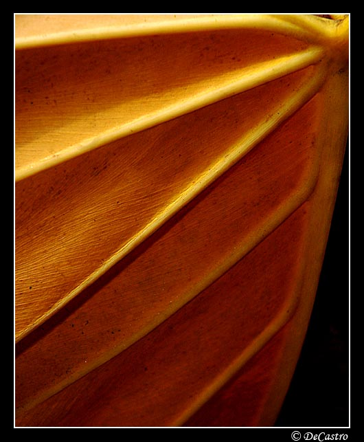"фото ""Gold"" метки: природа, цветы"
