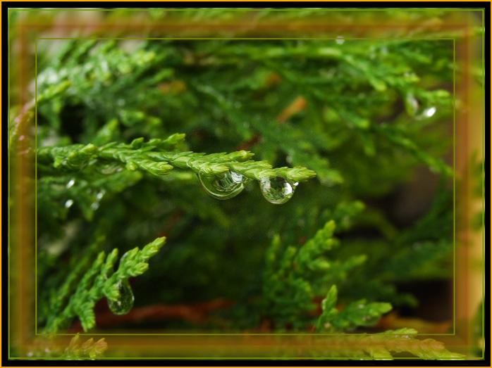 """photo """"Raindrops"""" tags: macro and close-up,"""