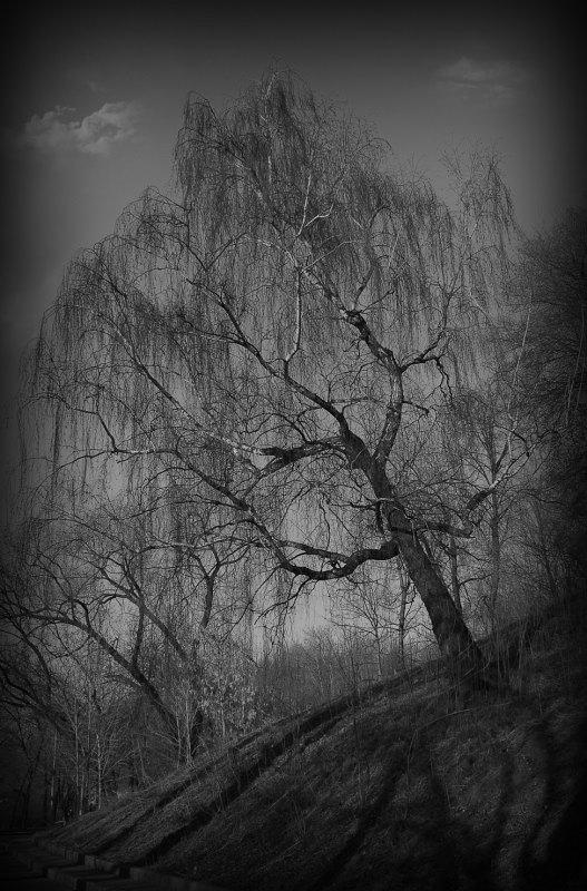 "photo ""***"" tags: landscape, autumn, spring"