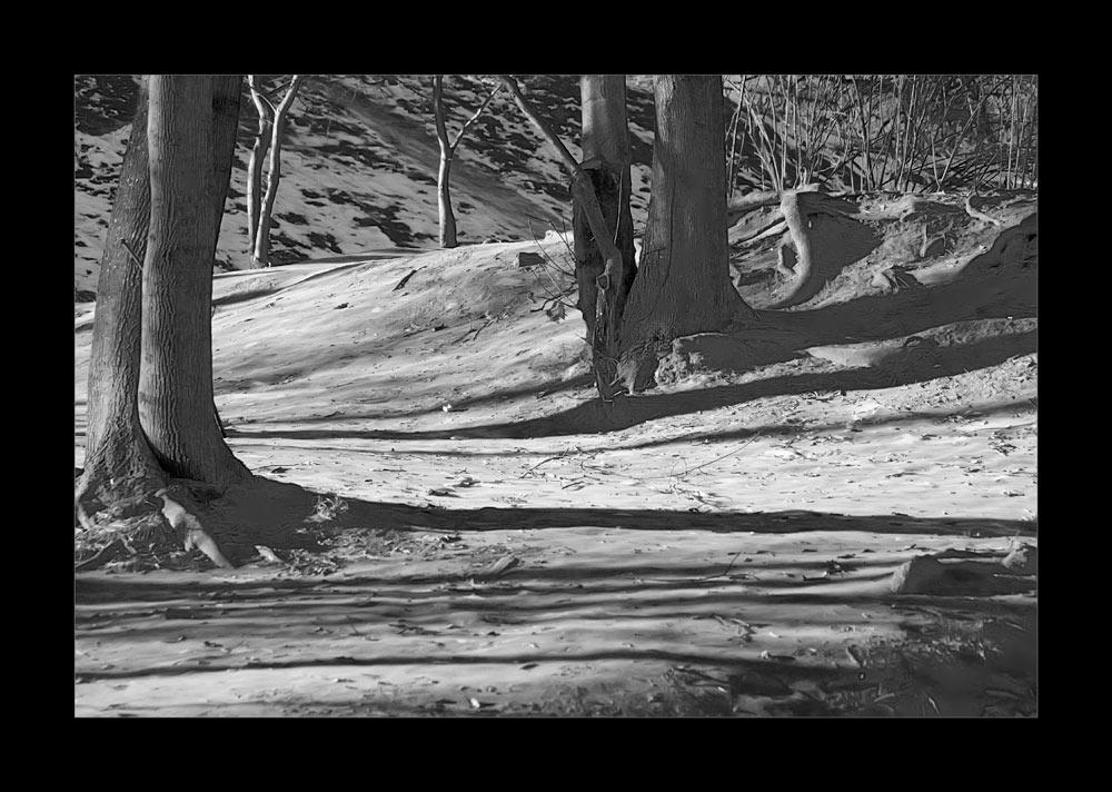 "фото ""Тени тянутся струнами зимними длинными.."" метки: пейзаж, черно-белые, зима"