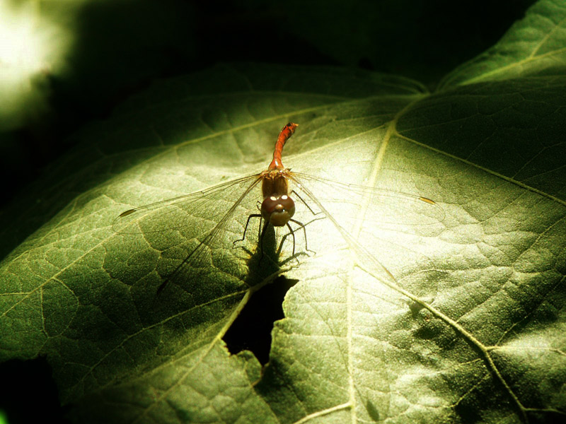 "photo ""kreatura"" tags: nature, insect"
