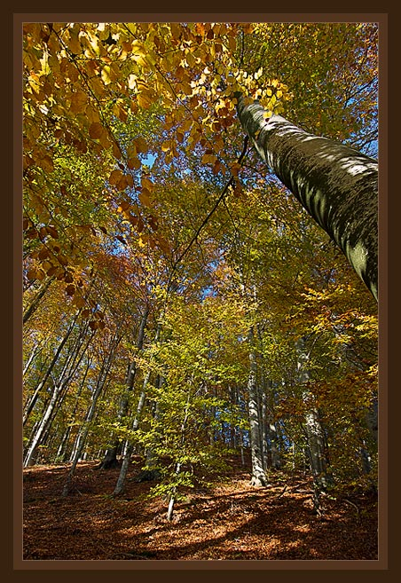 """фото """"осенняя головокружительная :)"""" метки: пейзаж, лес, осень"""