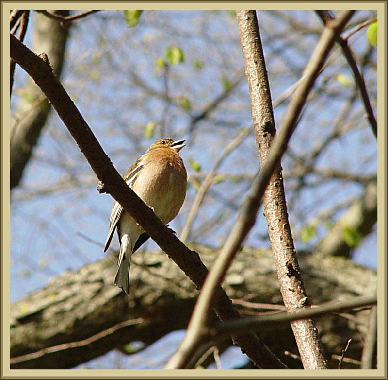 """фото """"Птичка - невеличка..."""" метки: природа, дикие животные"""
