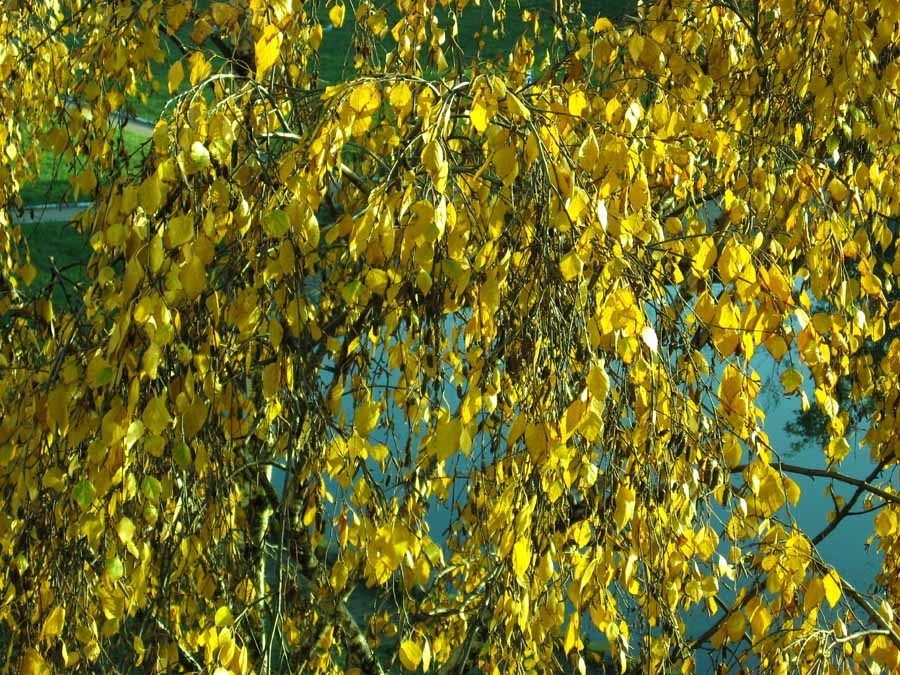 "фото ""Золото"" метки: пейзаж, разное,"