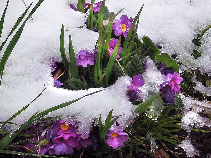 """фото """"***"""" метки: природа, пейзаж, зима, цветы"""