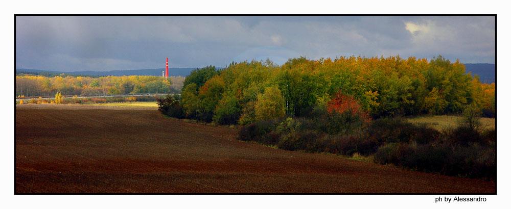 """фото """"colori"""" метки: пейзаж, лес"""