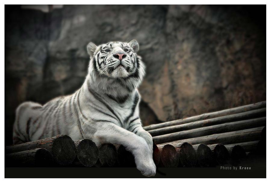 """фото """"***"""" метки: природа, разное, дикие животные"""