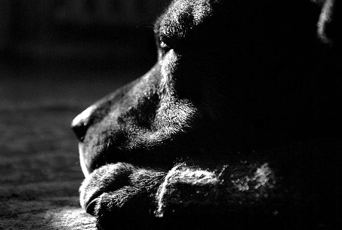 """фото """"Впереди старость"""" метки: природа, черно-белые, домашние животные"""