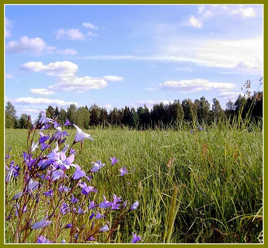 """фото """"тишина"""" метки: пейзаж, лето"""